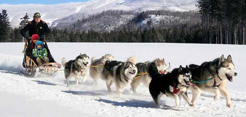 canada_mont-tremblant_huskys.jpg